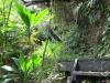 Staircase, Hilo, Hawaii