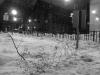 snow garden, 2-1-2011