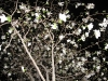 night-tree-spring4