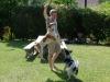 Flying dogs, Ojai, California
