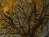 falltree1