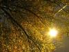 falltree3