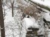 snow1219094