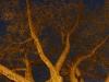 night-tree-spring2
