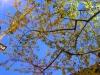 springtree01
