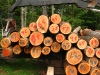 Logging around Bear Spring Mountain, New York
