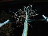 wintertree03
