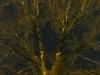 wintertree13